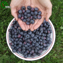 Rich nutrition Blueberry seeds Organic Fruit  Tree Seeds Home Garden Fruit Plant  ,Can Be Eaten!  30 pcs b006