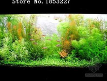 New Fresh Free Shipping Hot selling 50pcs aquarium grass seeds water aquatic plant seeds (35 kinds) family easy plant seeds