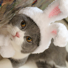 [MPK Pet Store] Rabbit Ears Cat Hat, 2 Sizes Available(China)