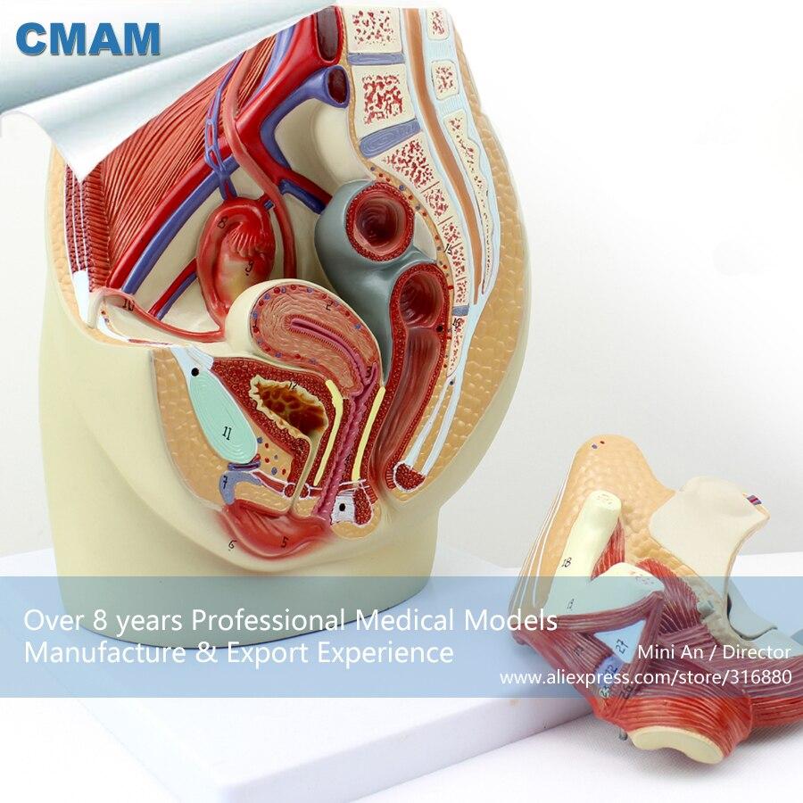 CMAM-ANATOMY02 Life Size Female Pelvis Section Anatomical Model, 3part, Anatomy Models &gt; Male/Female Models &gt; Female Models<br><br>Aliexpress