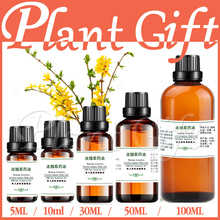 100% pure plant Herbal medicine oil Weeping Forsythia herbal oil Essential oil Fructus forsythiae Phillyrin Forsythia suspensa(China)