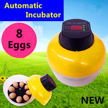 1 Pcs 8 eggs Automatic Incubator Mini Incubator For Chicken Duck Goose Quail Birds Automatically turn eggs(China)