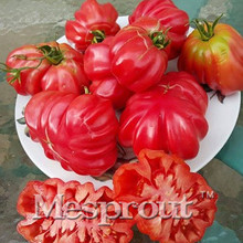 100PCS - Greek Rare Tomato Seeds Heirloom Sweet Gardening Seeds Plants Non Gmo Vegetable Seed For Home Garden Planting(China)