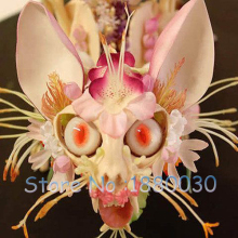 Rare Japanese monkey face orchid seed  DIY home garden plants pot bonsai flowers seeds 120pcs