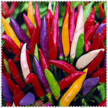 500 Pcs/Bag,Worlds Hottest Pepper Seeds, Worlds Hottest Pepper , Rare Chili Pepper Seeds Organic vegetable seed DIY home garden