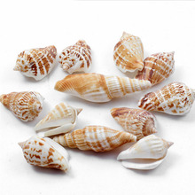 3 pcs Starfish Micro Landscape Coral Reefs Natural Seascape Accessories Conch Shells DIY Furnishing Articles Garden Decoration(China)