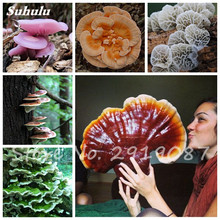New 50 Pcs Ganoderma Lucidum Seeds Lingzhi Reishi Mushrooms Seeds Organic Vegetable Seed For Home Garden Plant Non-Gmo(China)