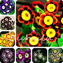 100 Pcs Perennial Petunia Seeds,Flowers Petunia Potted,Outdoor Bonsai Seeds,Natural Growth Petunia Plant Pot for Home Garden(China)
