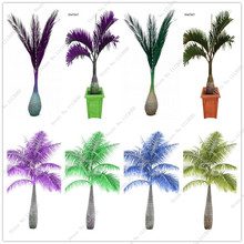 8 Color 30 Pcs Blue Bottle Palm Seeds Exotic Plants Tree Balcony Bonsai Diy Home Garden Plants Japan Giant Cycas Tree Plants