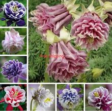 50seeds/bag Mixed columbines (cologne) seeds, long flowering season, beautiful, family garden plants, free shipping