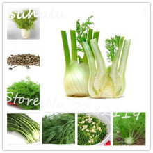 20 particles rare stubble cumin delicious vegetable of perennial garden balcony spice seasoning pot easy to grow free shipping