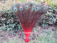 Wholesale 100pcs beautiful  red peacock feather eye 70-80 cm / 28-32 inch decorative celebration
