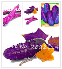Rare Purple Cucumber 100seeds/bag Organic Delicious Fruit and Vegetable Seeds diy home garden planting easy to grow
