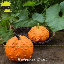 Heirloom 'Sanchez Buffoon' Pumpkin Seeds, 20 SEEDS/PACK, NON GMO Edible Vegetable Seed(China)