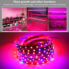 ASMTLED 5050 LED Plant Grow Lights 0.5 -5M Waterproof DC12V Red Blue 3:1, 4:1, 5:1,for Greenhouse Hydroponic Plant Growing