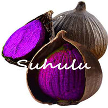 100 Pcs Black and Purple Garlic Seeds Pure Natural and Organic Vegetable Seeds Healthy Bonsai Seeds for Home & Garden Plants