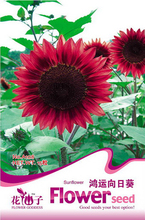 Buy 2 Get 1!(Can accumulate ) 1 Pack 15 Seeds France Red Fortune Sunflower Flower Seeds A108