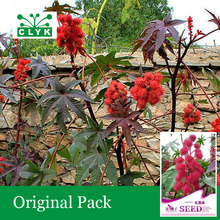 1 original pack 6 pcs / bag Castor bean Seeds, Ornamental Herbal Plant Red Castor Bean Seeds(China)