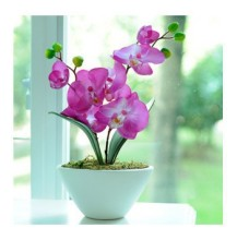 20 seeds/pack butterfly orchid seeds family package easy to plant seeds balcony patio