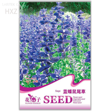 Blue Butterfly Sage Flower Seeds, Original Package, 50 seeds, strong aroma ornamental flowers aromatic A157