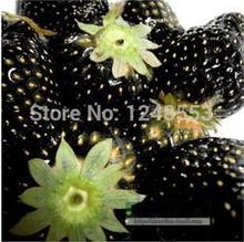 Promotion!!! 600 pcs/ 24 kinds strawberry seeds green black blue orange white red pink + rose seeds for gifts, Bonsai, DIY(China)