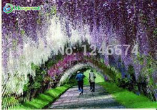 5pcs/bag wisteria flower seeds,wisteria flower,chinese wisteria bonsai white sky blue pink yellow purple free shipping