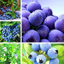 Hot sale!!! 80 seeds / pack, Blueberry BONSAI series, Heirloom Blue Berry fresh seeds, Edible fruit, Indoor, Outdoor Available(China)