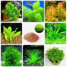 Hot Sale 200 Pcs New Aquarium Grass Seeds (Mix) Water Aquatic Plant Seeds Family Easy Plant Seeds For Decorate The Aquarium