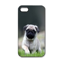 Cute Pug Dog In Grass Custom Hard Cell Phone Case For iPhone4 4S