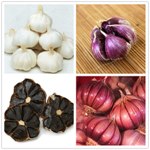 100 pcs/bag Multi-petals garlic seeds Organic seeds vegetables Kitchen seasoning food bonsai or pot plant for home garden