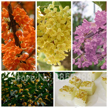15pcs Courtyard Fragrant Flower Seeds, Perennial Osmanthus Fragrans Seeds, Seeds Mixed Color Flower Sementes Home Garden