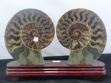 905g NATURAL CUT CRETACEOUS AMMONITE FOSSIL Sliced + STAND 181g(China)