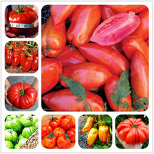24kinds Tomato Seed Rare Rainbow tomato seeds Bonsai Organic Vegetable fruit seeds Potted plant for Home & Gardens - 50PCS