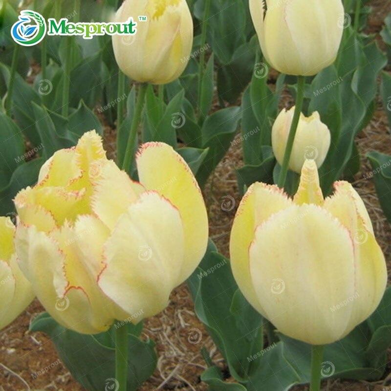 tulipe bleu achetez des lots petit prix tulipe bleu en provenance de fournisseurs chinois. Black Bedroom Furniture Sets. Home Design Ideas