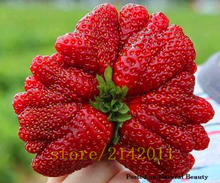 300pcs/bag giant strawberry seeds,red strawberry,Organic Heirloom fruit vegetable seeds,bonsai potted plant for home garden