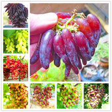 50 seeds/pack Very Rare finger grape seeds Advanced organic fruit seeds sweet & Delicious Natural growth plants for home garden