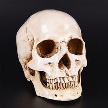 JETTING Decorative Human Skull Resin Replica Medical Model Lifesize 1:1 Halloween Home Decoration Craft Skull(China)