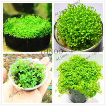 Rare Mini Dwarf Pearl Grass Water Aquatic seeds, Fish Tank Plants,Aquarium Grass Seeds,100pcs / bag(China)