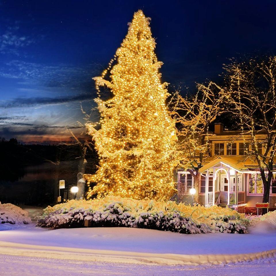 Holiday string lights (17)