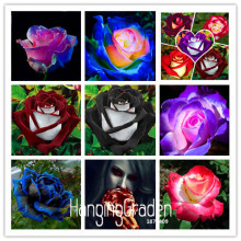 New Seeds 2017!White Heart Pink Side Rose Seeds 24 Colors Plants Potted Rose Rare Flower Seeds Balcony 50 PCS,#KJ1W18(China)