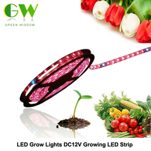 LED Grow Lights DC12V Growing LED Strip 5050 IP20 IP65 IP68 Plant Growth Light for Greenhouse Hydroponic plant 5m/lot(China)