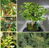 1 pack high quality coffee beans (Coffea Catura Arabica) bonsai seeds DIY home garden free shipping (original packaging)