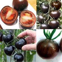 200pcs Rare Seeds Tomato Black Cherry Vegetable Seed Tasty Russian Heirloom Novel Plants
