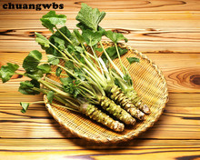 200 pcs Wasabi Seeds, Japanese Horseradish Seed Vegetable Seeds Bonsai Plant DIY Home Garden Plants(China)