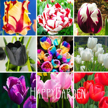 10pcs/pack 19 varieties of tulip petals tulip seeds potted indoor and outdoor potted plants purify mixing colors,#JJTQ4E