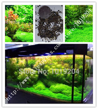 Free Shipping Hot selling 1000pcs aquarium grass flower seeds  water aquatic plant seeds (mix) family easy plant seeds