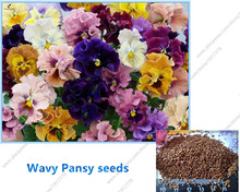 50pcs100%true Wavy Pansy (Viola tricolor) Seeds Mix Color indoor Wavy Viola Tricolor Flower seeds Bonsai Flower for home garden