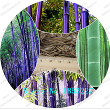 GGG Free shipping 50 +fresh giant moso bamboo seeds for DIY home garden Household items tree bamboo(China)