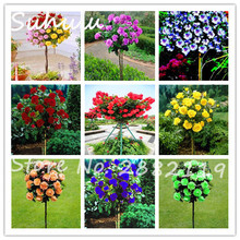 20 pcs/bag rose tree beautiful rose seeds dwarf bonsai tree Seeds Chinese Roses mix colors give Lover Plant light up your garden