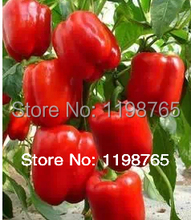 Promotion! 50pcs Super Big Red Sweet Pepper Seeds 100% High Quality Paprika Free Shipping(China)